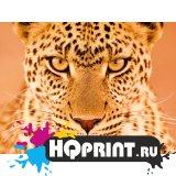 С леопардом
